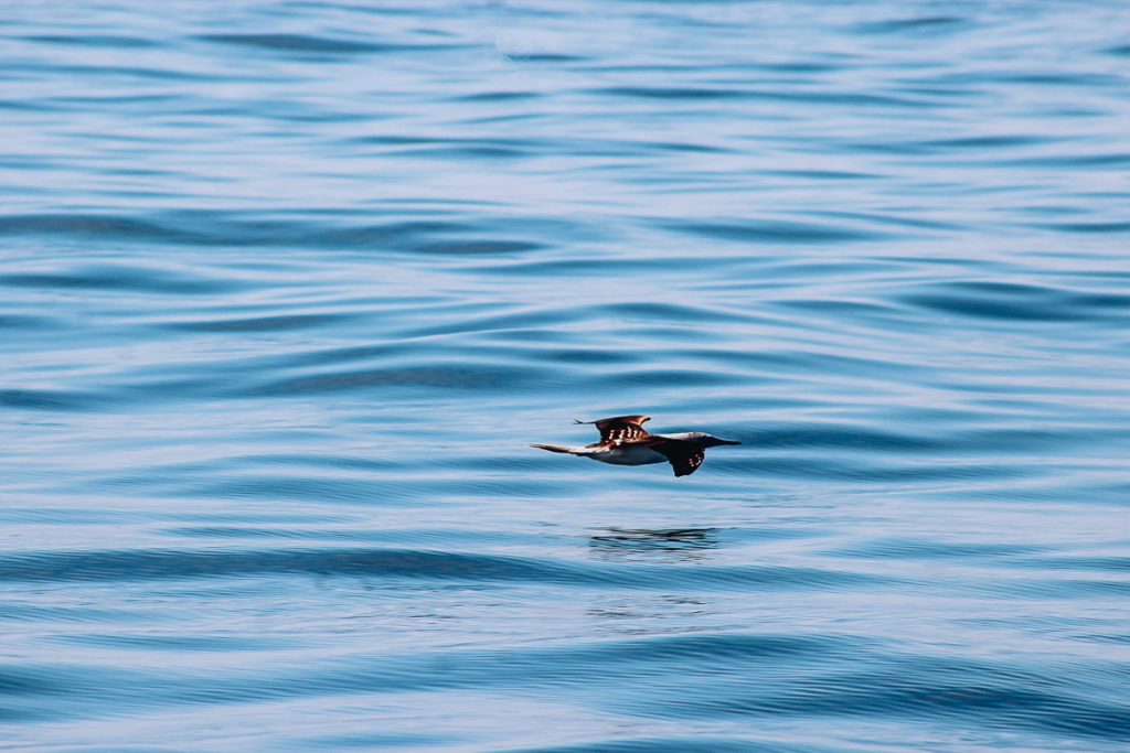 A bird flies low over the water near las Islas Marietas