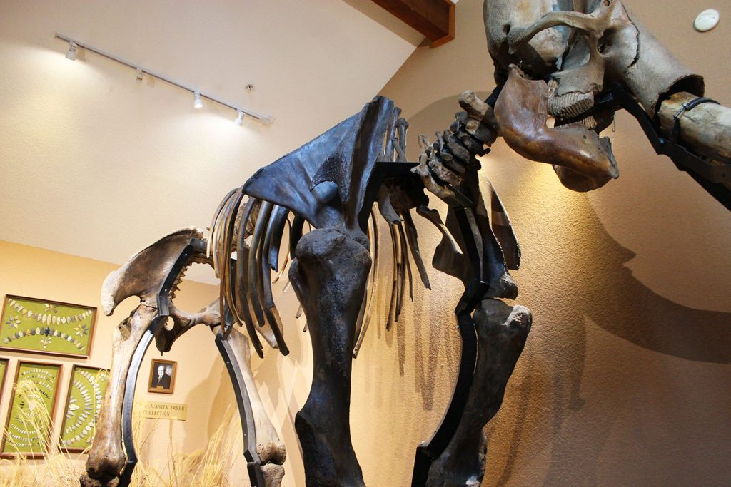 Woolly mammoth bones at the Museum of Native Americans in Bentonville, Ar